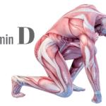 ビタミンDで筋肉温存