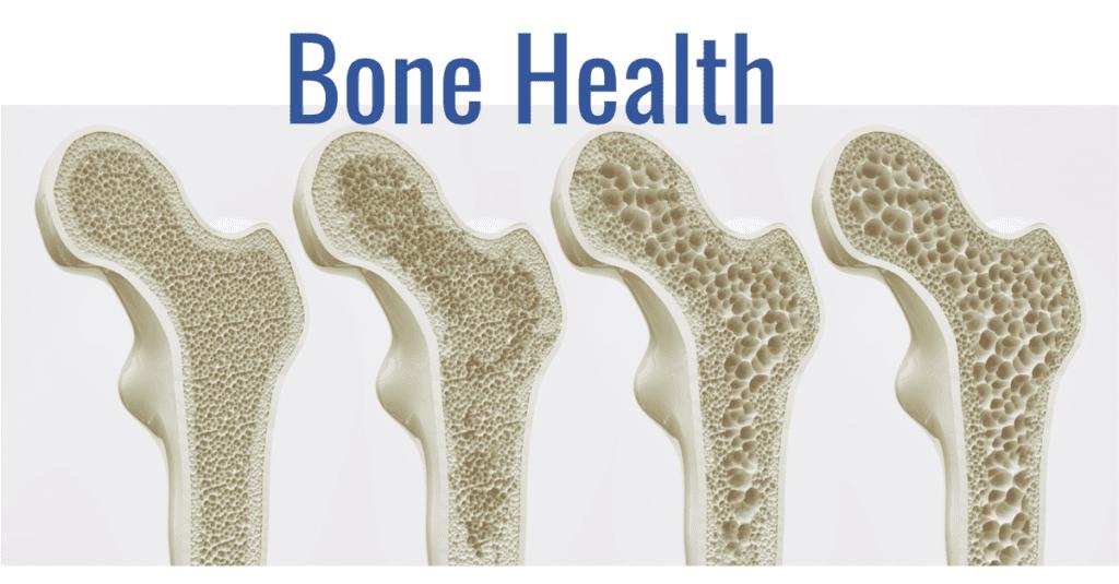 骨の健康と性ホルモン