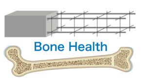 骨とタンパク質