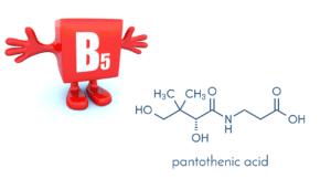 ビタミン B5