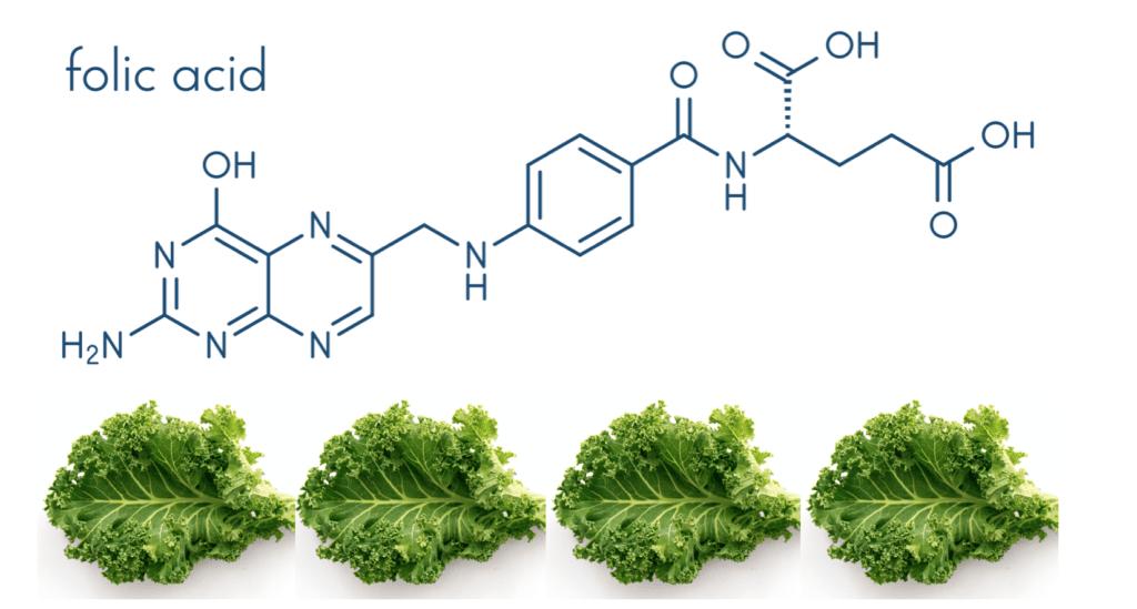 葉酸 ビタミンB9