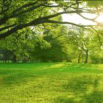 緑の自然環境が中毒を防ぐ