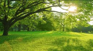緑の自然環境が、中毒を防ぐ